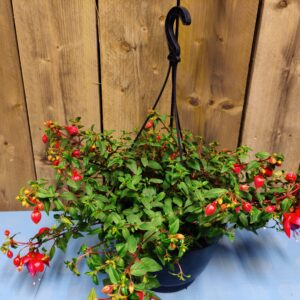 fuchsia red