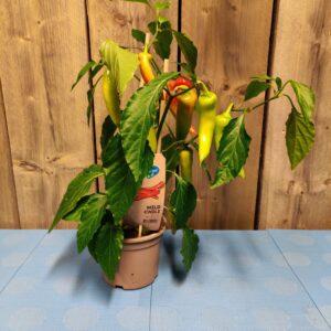 peperplant eetbaar