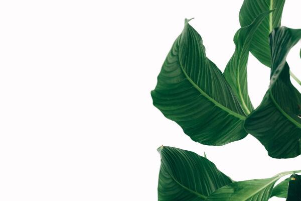 foto_binenplanten